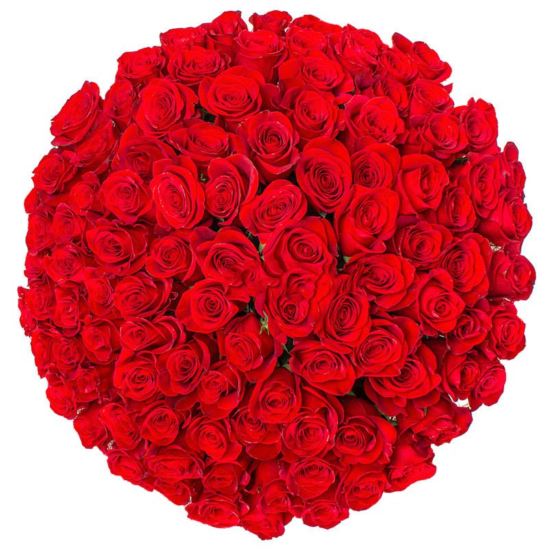 Розы Эквадор 101 роза 50 см