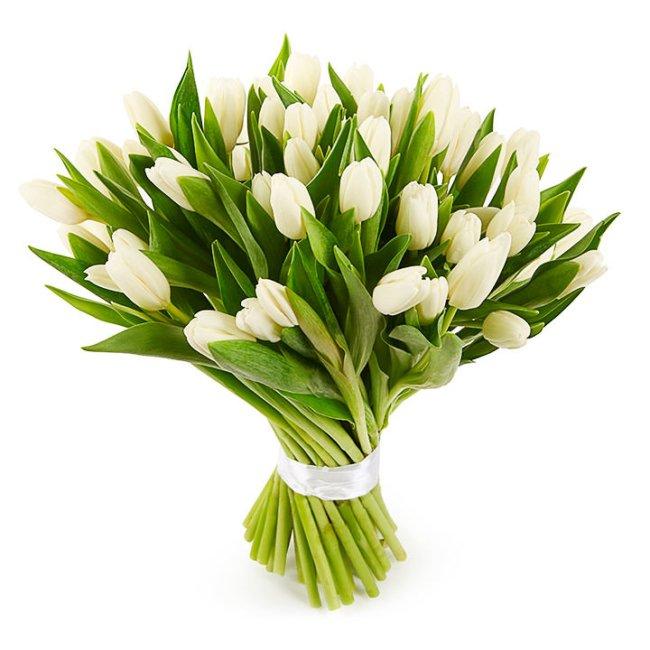 Тюльпаны кремовые
